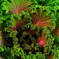 plant-690051_960_720[1]